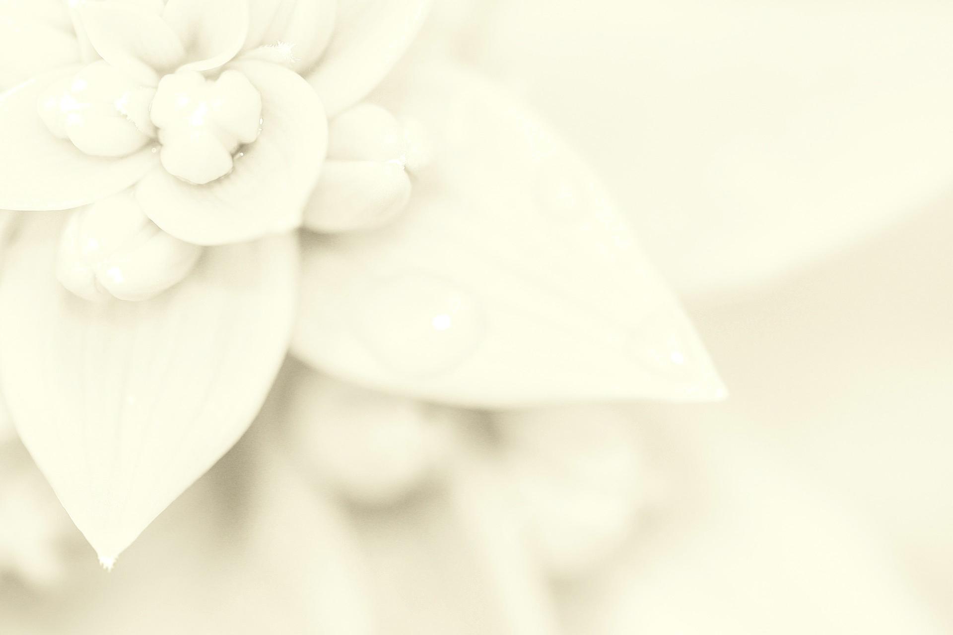 06dbdd63c0f9 Come coinvolgere gli invitati al proprio matrimonio!